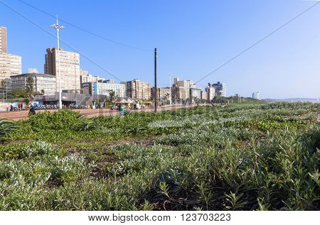 DURBAN SOUTH AFRICA - MARCH 23 2016: Vegetation on dunes and many unknown people on promenade against city skyline in Durban South Africa