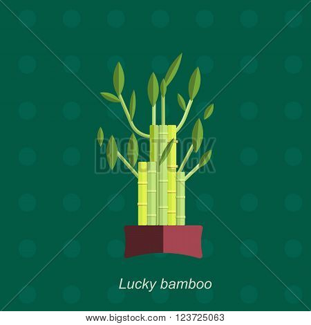 Illustration of houseplant, indoor and office plant in pot. Vector plant bamboo in pot. Flat bamboo, vector icon of bamboo. Office plant in pot.