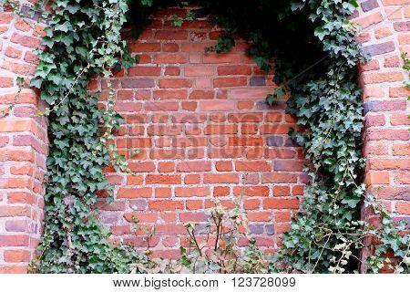 Brick Wall And Ivy