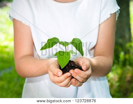 Young plant in hands against spring green background. Ecology concept