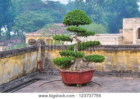 Bonsai - a classic decoration expensive homes in Asia.