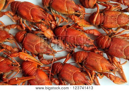 Cooked Crayfish Isolated On A White Background.