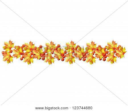 autumn leaves isolated on white background. Golden autumn;