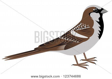 Realistic sparrow on white background. Sparrow bird vector illustration