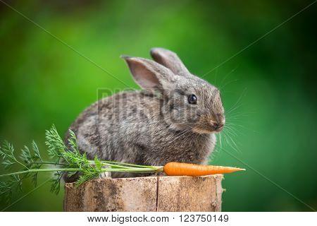 Baby rabbit bunny on stud whith carrot agaist green bokeh background