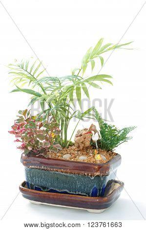 Miniature Garden in a Pot, beautiful house plant