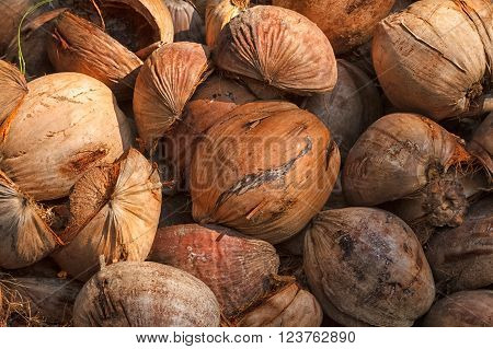 Pile of old coconuts, Coconut Background Textured