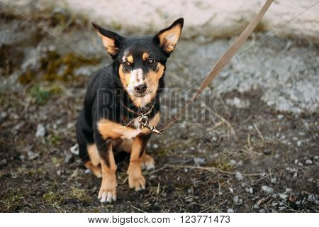 Funny Pensive Mixed Breed Small Size Dog Sits Outdoor.