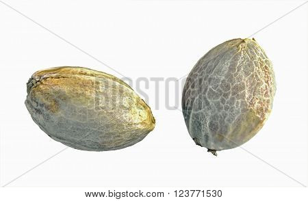Hemp seeds isolated on a white background