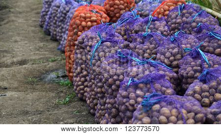 Fresh potatoes in the bags, potatoes, view on bags and crates of potato in storage house