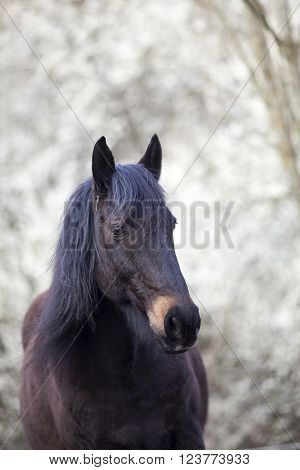 black horse with beautiful natural white background
