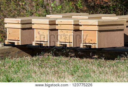 New honey bee nucleus hives in an apiary in late afternoon sunshine in spring.