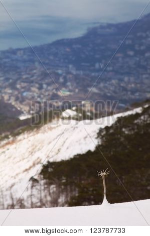 wintry mountains landscape. outdoor shot