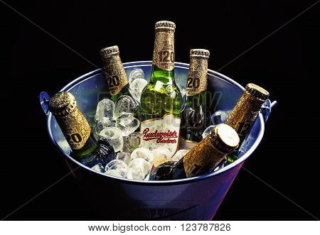 Cacak, Serbia - March 30, 2016: Six bottles of Budweiser beer in bucket, served for group of people.