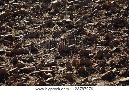 Rocks on a dry field in Africa.
