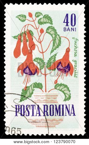 ROMANIA - CIRCA 1964 : Cancelled postage stamp printed by Romania, that shows Hummingbird.