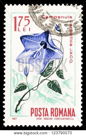 ROMANIA - CIRCA 1967 : Cancelled postage stamp printed by Romania, that shows Carpathian Harebell.