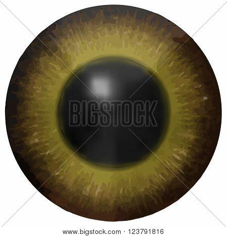 Dark brown eye iris vector texture on white background
