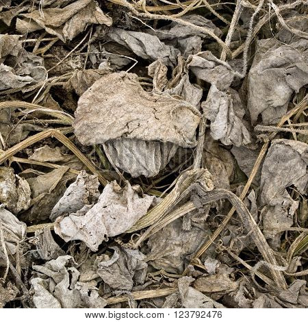 Dead leafs closeup background.