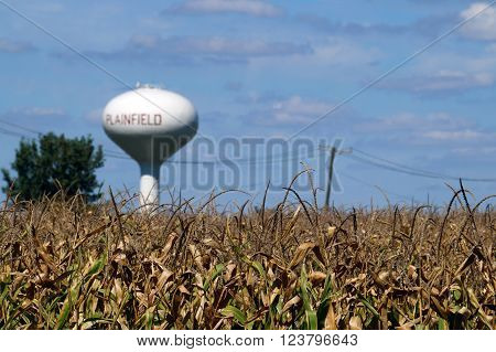 Tassels of corn in a cornfield in Plainfield, Illinois during September.