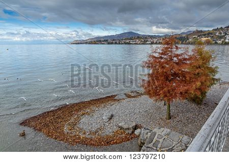 Red tree on Lake Geneva in Montreux, canton of Vaud, Switzerland