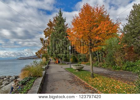 Yellow tree on Lake Geneva in Montreux, canton of Vaud, Switzerland
