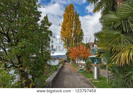 Yellow tree on embankment in Montreux, canton of Vaud, Switzerland