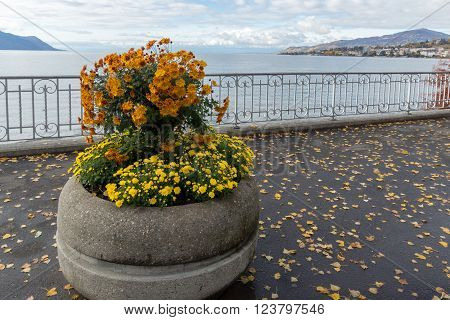 Flowers on embankment in Montreux, canton of Vaud, Switzerland