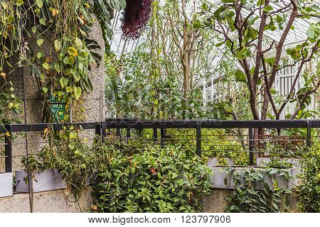London, United Kingdom - March 23, 2016: A view of the Barbican Garden where plants grow wildly in a glass house in London, United Kingdom on the 23rd of March 2016.