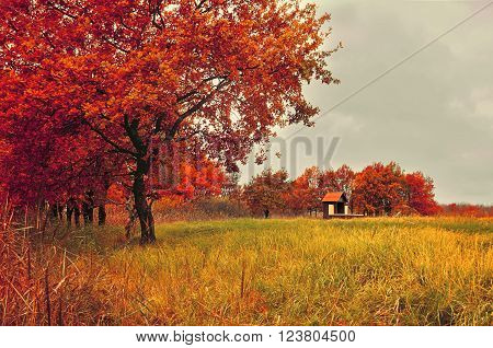 Autumn cloudy landscape -lonely small house near the old oak grove in foggy cloudy weather. Soft focus and creative filter applied.