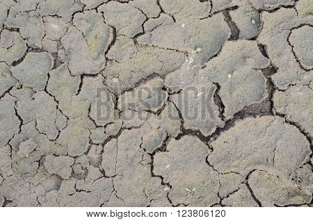 Closeup Of Dried And Crackled Ground Texture.