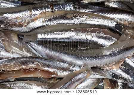 Anchovies, Close Up