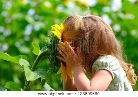 Happy little girl smelling a sunflower on the field in summer.