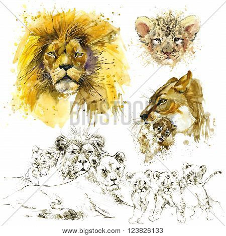 Lion pride illustration. Lion watercolor. Lion sketch. Lion family.