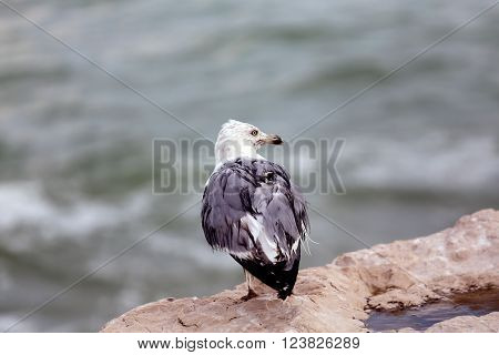 Old Seagull Perched On Rocks By The Sea