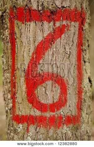 sexto pintado en un árbol viejo