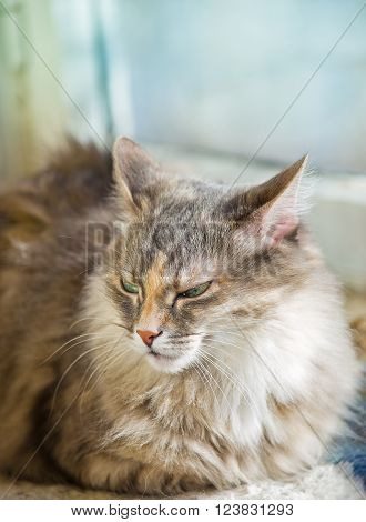 Gray cat sittingon a sunny day time on a balcony happy cat domestic cat