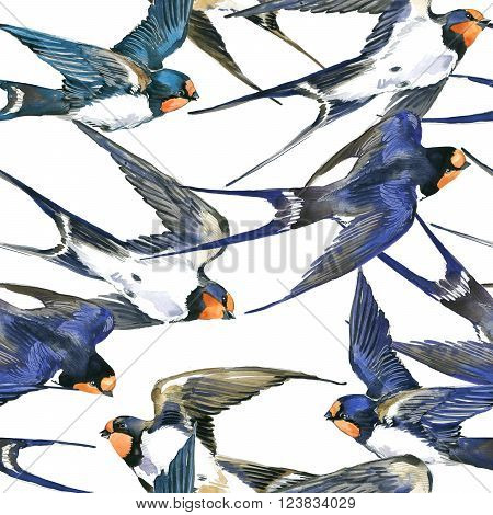 Swallow. Swallow watercolor illustration. Swallow seamless pattern. Spring Bird. Bird Swift. Swift flight