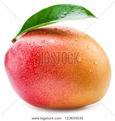 Mango fruit with water drops. Isolated on a white background.