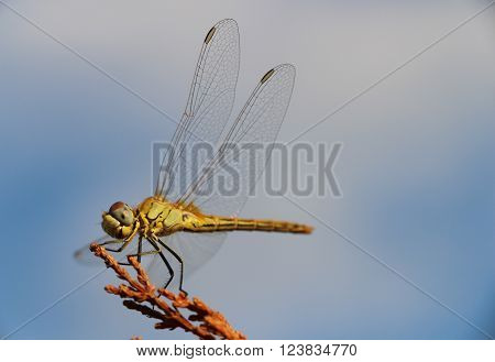 Detailed macro image of dragonfly on plant.
