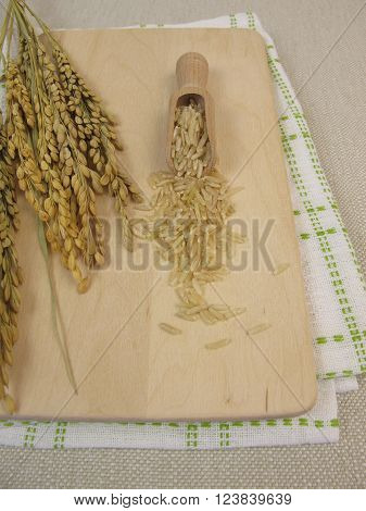 Raw brown rice and rice panicles on wooden board