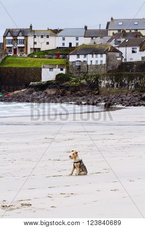 A lonely dog sitting on a deserted beach whilst taking a break from a long walk.