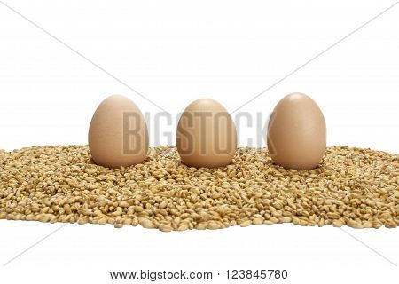 three chicken eggs standing on wheat grains,isolated