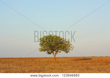 Landscape lonely tree in the steppe against the sky