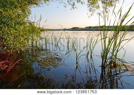 Landscape, reeds, duckweed, a tree on the river bank