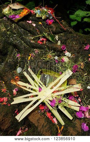 Balinese-Hindu offerings of flower petals palm-leaf boxes money and incense are left for the Gods at a rural Hindu shrine in Sebatu Sacred Springs Bali Indonesia.