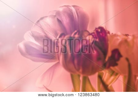 Nice flowers of tulips in purple tones