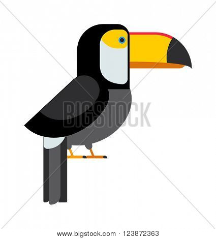 Exotic toucan and wild toucan tropical bird. Toucan beautiful zoo brazil character, cute toco amazon fauna. Toucan ramphastos toco sitting on tree branch and tropical wild colorful bird flat vector.