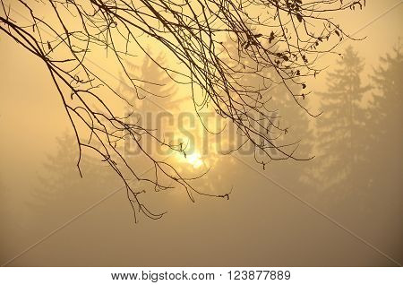 Mist in autumn morning with brown branch of tree