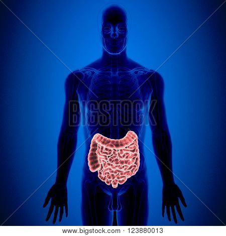 The small intestine or small bowel is the part of the gastrointestinal tract between the stomach and the large intestine, and is where most of the digestion and absorption of food takes place. The small intestine has three distinct regions - the duodenum,